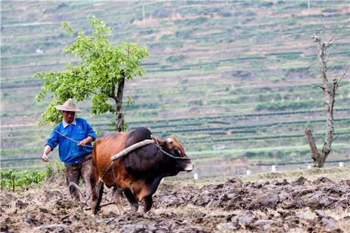 进行土地耕作的农民
