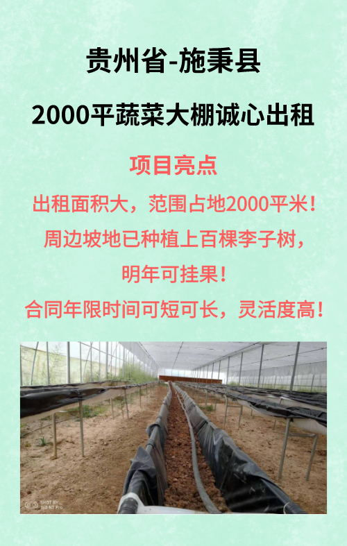 贵州施秉县2000平蔬菜大棚