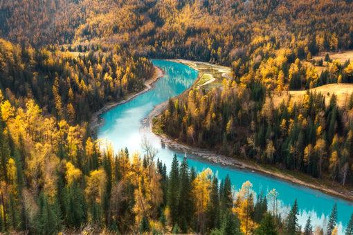 新修订的森林法将从2020年7月起施行
