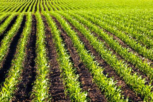 非法占用农用地类案件有哪些特点
