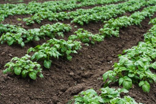 常用耕地是基本农田吗