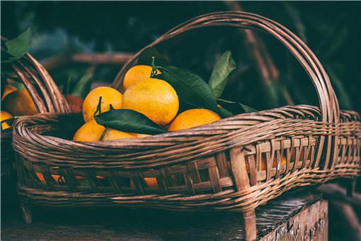 2020年椪柑苗多少钱一棵-摄图网