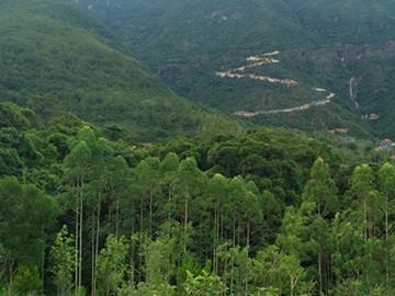我国的森林资源分布在哪些地区?有哪些特点?