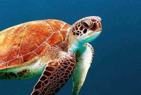 水陆两栖动物小乌龟的生活习性是怎样的?