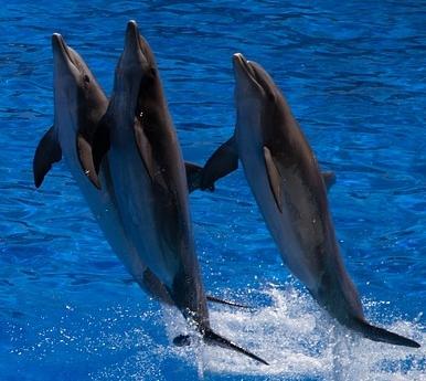 海豚是哺乳动物吗?它怎么吃奶?