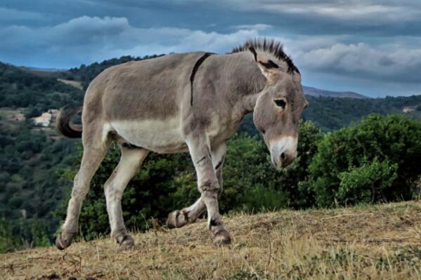马科动物驴一年能繁殖几胎?能长多少斤?怎么养赚钱?技术有哪些?