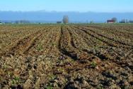 甘肃省关于完善农村土地所有权承包权经营权分置办法的实施意见出台