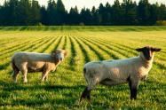 土地流转后,这些新型农业经营主体正在逐渐壮大!