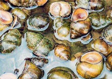 海鲜 美食 450_320