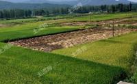 企业赚,农民亏!农村土地流转如何合理定价?怎样让农民收益最大化?