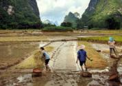 农业农村部、财政部发布2019年重点强农惠农政策!