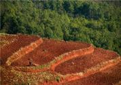 耕地租赁合同怎么写?附合同范本参考