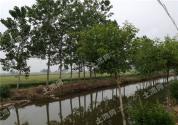耕地占用税法9月1日起施行,占用耕地建房需缴税