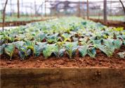 西充农业电商产业园正式开园,预计2019年招引入住电商企业超过1000家
