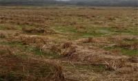 农业农村部将统一研究制定全国土地流转合同文本!
