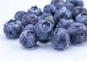蓝莓北方可以种植吗