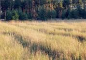 2019年土地回收一亩给多少钱?
