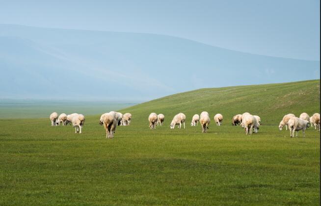 羊肉价格多少钱一斤?(附最新市场行情分析)