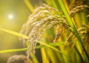 2020年粮食补贴(直补)政策还有吗?每亩补贴标准是多少?