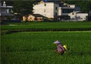 处暑可以从事哪些农事活动?气候变化特征有哪些?