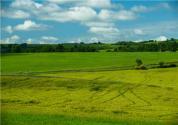 河北将开设4个鲜食玉米主产区,种植面积约41万亩!