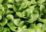常见蔬菜的种植方法