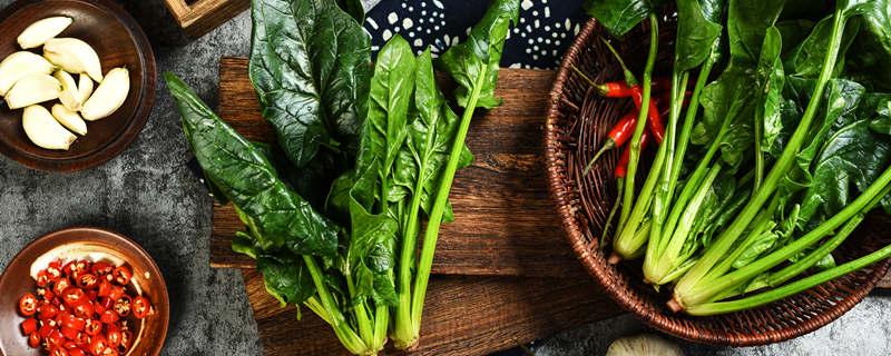 秋菠菜怎么种