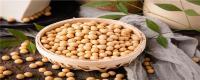 怎么种黄豆