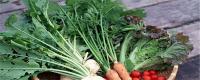 怎么种萝卜菜