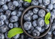 蓝莓苗多少钱一棵?培育难度大吗?
