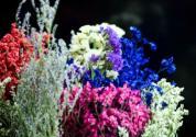 干花有哪些品种