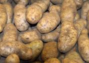 冬季马铃薯种植技术有哪些?