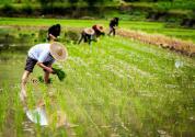 山西农业扶贫新政策,农业龙头企业技改资金每年不少于1亿元
