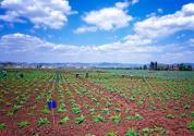 最新:农民专业合作社有哪些扶持政策?农业农村部答复了