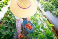 家庭农场等新型农业经营主体生产面临哪些困难?农业农村部说了这四点