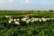 畜禽禁养区可以养什么?搬迁补偿标准是是多少?
