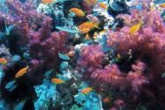 2070年地球所有珊瑚礁或将消失!为什么会消失?它是由什么组成?