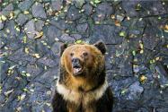 熊冬天怎么过冬