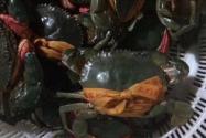 现在三门青蟹价格多少钱一斤?几月份上市?