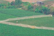 2027年,农村土地还会再次进行重新分配吗?