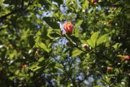 春季修剪树枝的方法