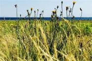 除杂草用什么农药