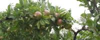 秋天适合种什么水果?