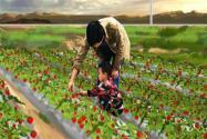 什么叫农村新成长劳动力?最高每人补贴2000元!你符合条件吗?