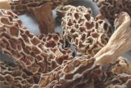 干羊肚菌价格多少钱一斤?怎么泡发才没有泥沙?