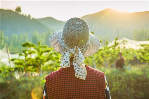 2019-2020年农村创业干什么好?申请贷款需要什么条件呢?