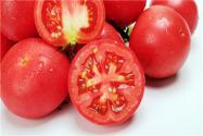 生西红柿籽怎么种