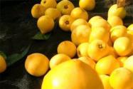 蛋黄果籽怎么种