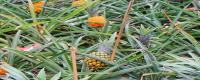 菠萝树几年可以结果
