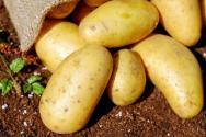 2019土豆价格预测:多少钱一斤?未来种植前景如何?